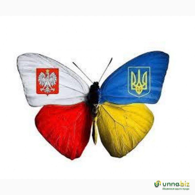 Сортировка саженцев клубникив Польше