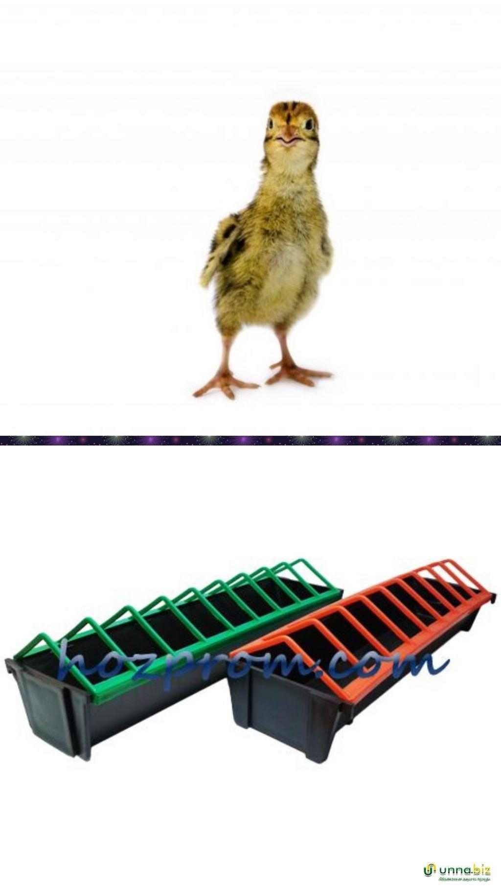 Перепелиная кормушка для любого возраста птицы