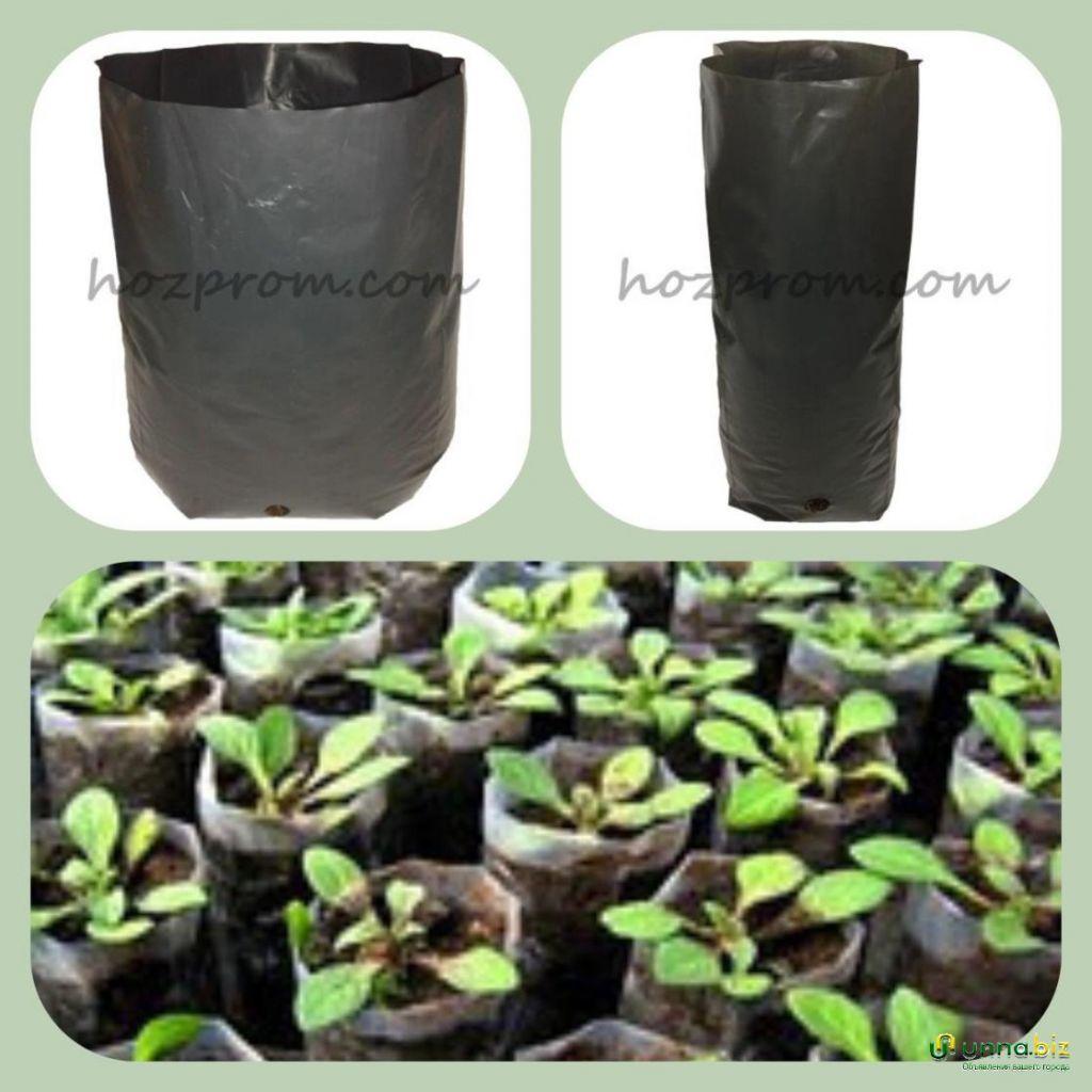 Пакеты для рассады Выращивание хвойных растений Пакеты для саженцев